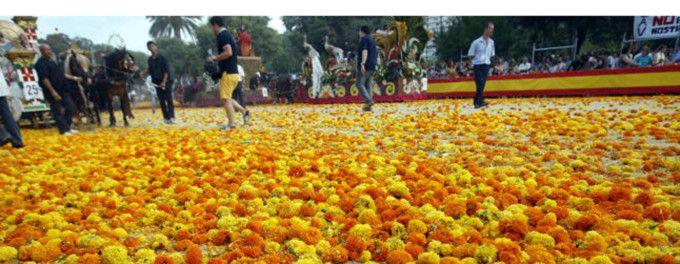 Claveles Batalla Flores