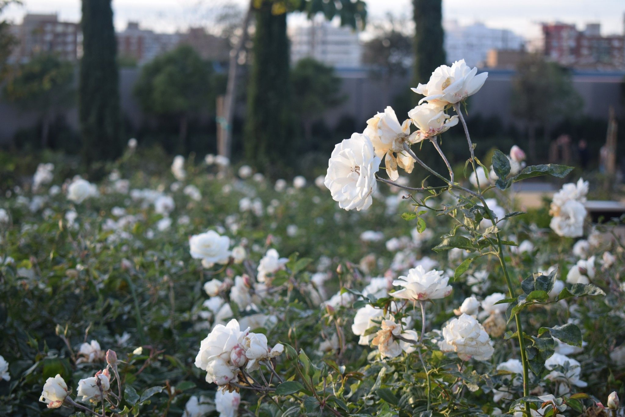 Jardín floral parque central de valencia