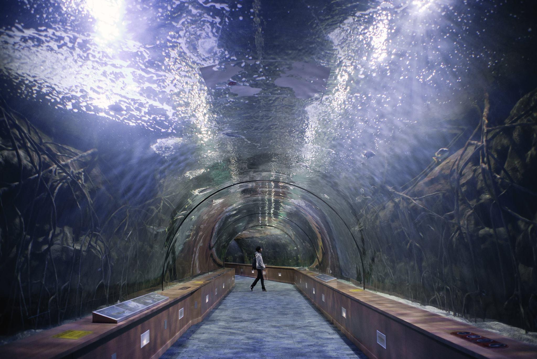 tunel-submarino-oceanografic