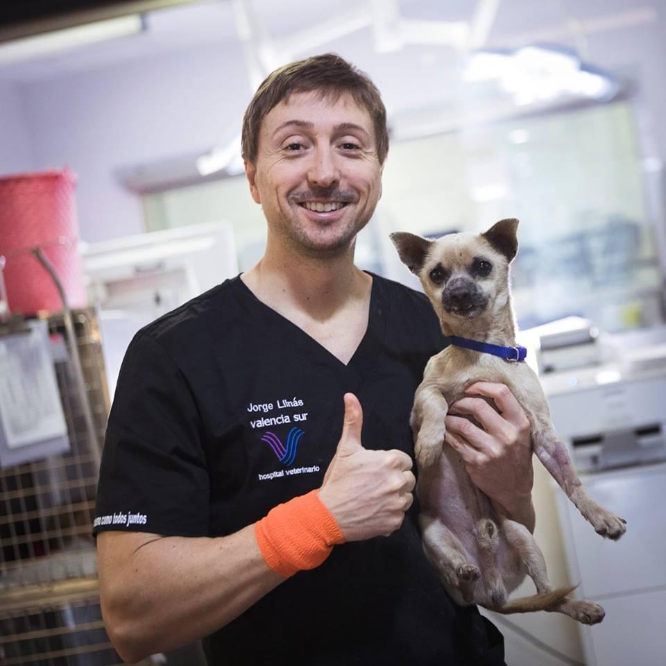 director-hospital-veterinario-valencia-sur