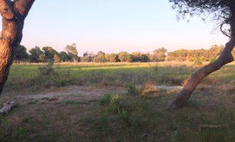 L'Ajuntament licita el contracte de conservació i protecció de la devesa de l'Albufera
