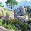 Les taules de concertació post-incendi forestal de Bolbaite i Carcaixent es constituïxen esta setmana