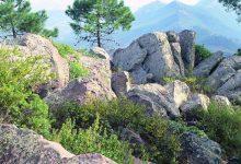 En marxa una 'app' que mostra per geolocalització la flora i fauna de la Comunitat Valenciana