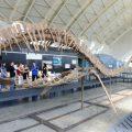 El Museu de les Ciències amplia a l'estiu les visites guiades en l'exposició 'Nikola Tesla. Ideas como relámpagos' i 'Els nostres dinosaures'
