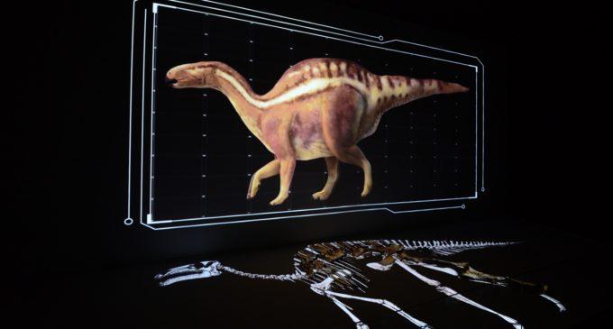 'L'interactiu' dedicat al Morelladon beltrani de l'exposició 'Els nostres dinosaures' reviu en 3D al dinosaure trobat en Morella