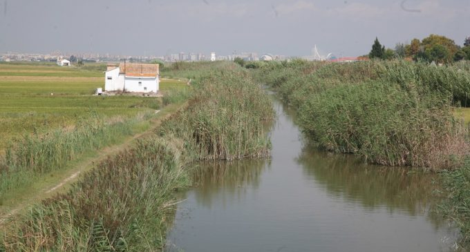 L'Ajuntament desbrossarà més de 20 quilòmetres de canals i séquies de l'Albufera