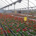 El CEE del IVAS rep un premi de Iberflora per promoure la inserció laboral de persones amb diversitat funcional en jardineria i viverisme