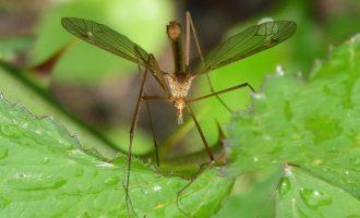 L'Ajuntament de Burjassot insistix en la lluita contra els mosquits en parcs i jardins municipals
