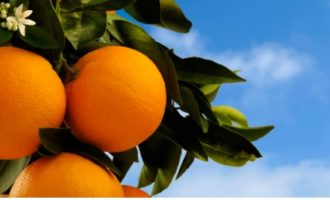 Compromís insta al Govern a rebutjar l'acord europeu que discrimina a la taronja valenciana