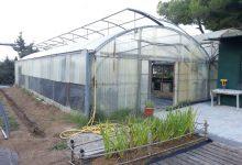 L'Ajuntament costruirà un hivernacle als vivers del Saler