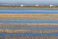 Mesures per a evitar el descens d'aigua en l'Albufera