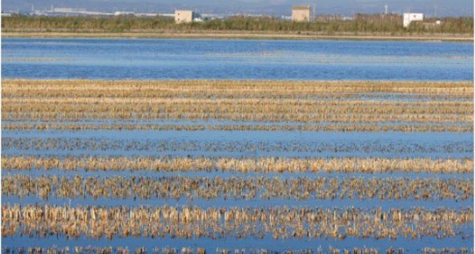 La Generalitat autoritza excepcionalment la crema de la palla de l'arròs en l'Albufera per raons fitosanitàries