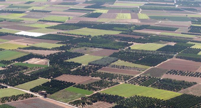El Consell anticipa esta setmana 40 milions d'euros de pagaments directes de la Política Agrícola Comuna