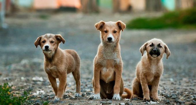 El Seprona ha actuat davant més 400 persones en 2016 per delictes contra animals
