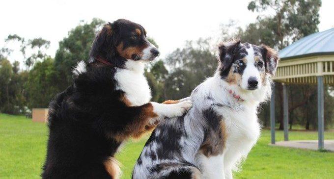 Torna la desfilada solidària AUPA/BIOPARC per a donar una segona oportunitat a molts gossos abandonats