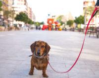Cens a 2.316 gossos en la campanya d'extraccions gratuïtes d'ADN