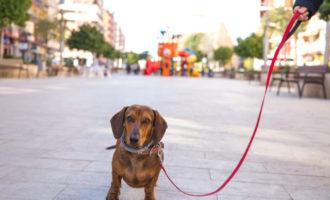Cs proposa entrenar a gossos per a detectar casos per l'olor