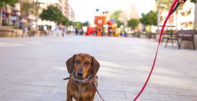 Passejar al gos en el toc de queda: sí o no?