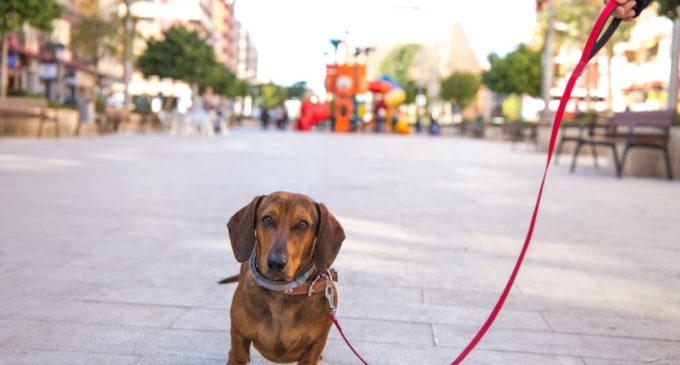Paterna ofereix un nou curs gratuït d'obediència canina urbana