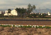 La producción ecológica crece imparable en la Comunidad Valenciana superando las 114.000 hectáreas