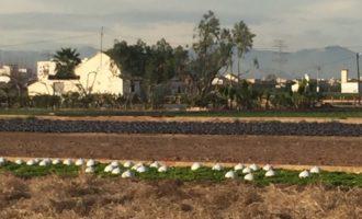 La sequera amenaça a la Comunitat amb una nova 'guerra de l'aigua'