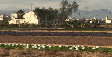La producció ecològica creix imparable a la Comunitat Valenciana superant les 114.000 hectàrees