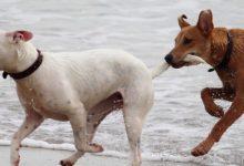 Una campanya convertirà cada foto amb mascotes d'Instagram en un euro per a alimentar animals sense llar