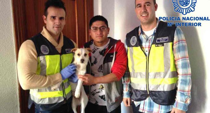 Policia Nacional deté a una persona per donar una pallissa a un gos de tan sol un any d'edat