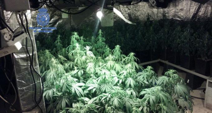 La Policia Nacional desmantella una plantació de marihuana en un domicili de Torrent
