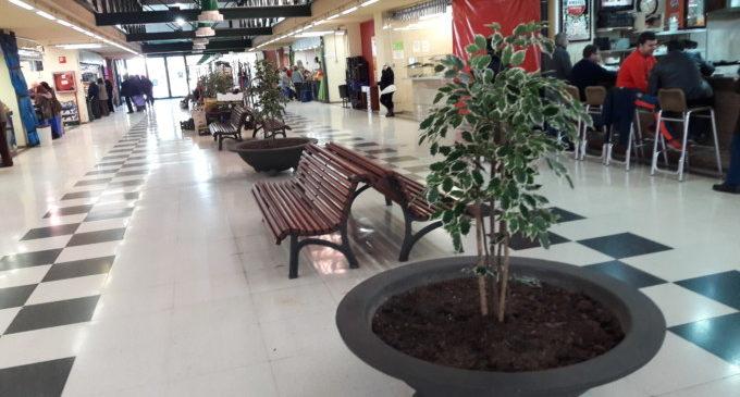 El Mercat Municipal de Castella ja té plantes noves