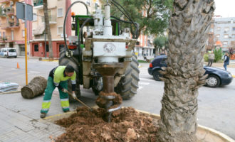 Paiporta tritura i extreu les soques dels arbres abatuts pel seu mal estat els últims anys