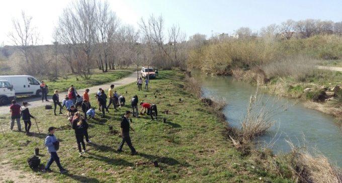 Paterna reforesta 700 espècies autòctones en la campanya del dia de l'arbre