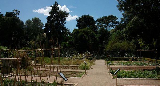 Se cerquen idees per a ampliar el Jardí Botànic de València