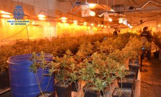 Desmantelada una plantación de marihuana en Alzira