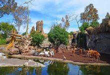 El futur parc d'aventures al costat de Bioparc València espera la seua aprovació