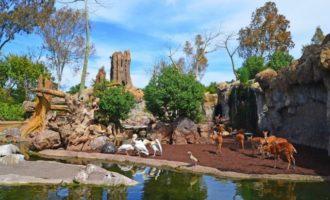 València podria comptar amb un parc aquàtic al costat del Bioparc