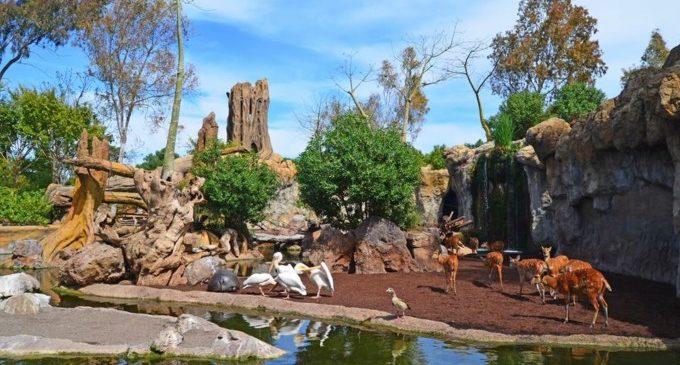 El futuro parque de aventuras junto a Bioparc València espera su aprobación