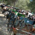Unes vacances especials per als més menuts a Llíria