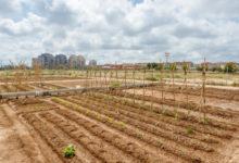 Xàtiva albergarà activitats de formació i divulgació per a dinamitzar l'agroecologia