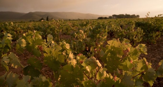 Bajo el sol de la Toscana valenciana