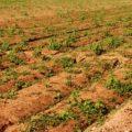 València presenta una alternativa de V-21 per a preservar fins a un 62% d'horta