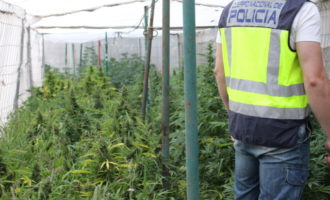 La Policia desmantella dues plantacions de marihuana a Torrent gràcies a la col·laboració ciutadana