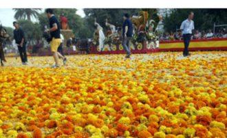 Dos milions de clavellons per a la Batalla de Flors d'enguany