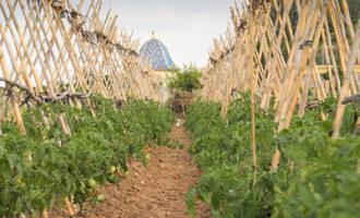 El ritme de pèrdua de terres de cultiu a la Comunitat Valenciana es frena en els últims tres anys