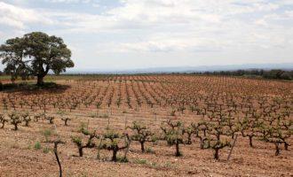 El Govern d'Espanya frenarà el cava valencià en 2018