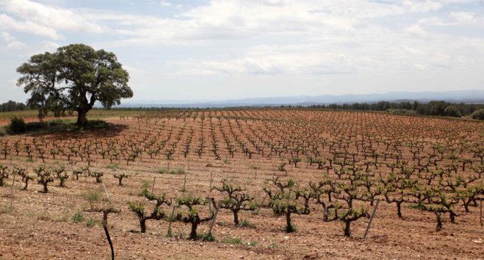 5 agricultors abandonen el seu treball cada dia a la Comunitat