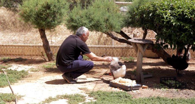 Avifauna, un espai de convivència d'animals exòtics a València