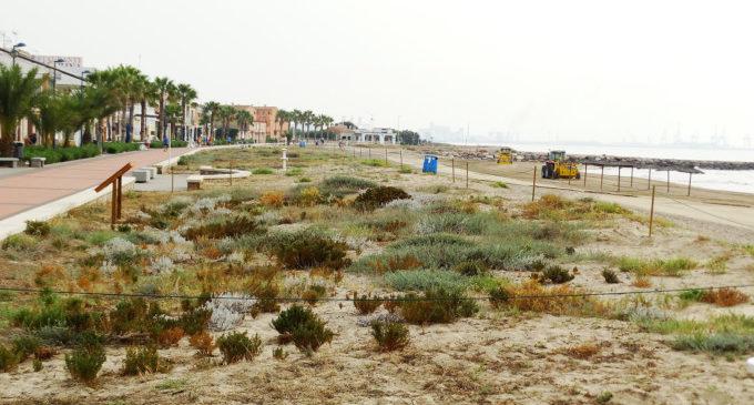 La Diputació promou actuacions de restauració i manteniment de l'ecosistema dunar al litoral valencià
