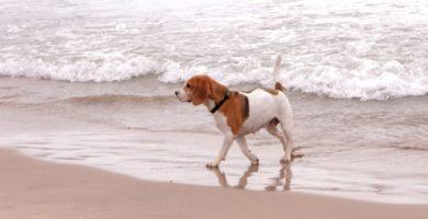 La Comunitat Valenciana, la autonomía con más playas caninas de toda España