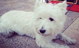 Gaudeix amb la teua mascota dels restaurants dogfriendly a València